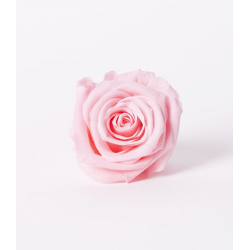 ROSA - Tête Rose Stabilisée D5cm Rose Clair