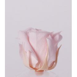 ROSA - Tête Rose Stabilisée D4cm Rose Clair par 12