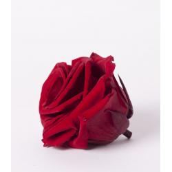 ROSA - Tête Rose Stabilisée D8cm Rouge