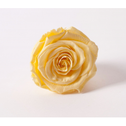 ROSA - Tête Rose Stabilisée D5cm Jaune