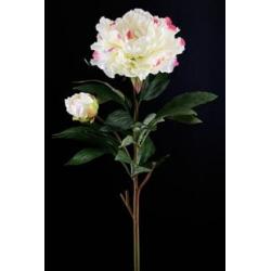 Pivoine Crème 1 fleur H90 cm
