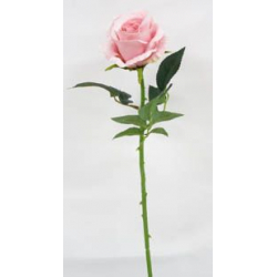 Rose Rose H69 cm