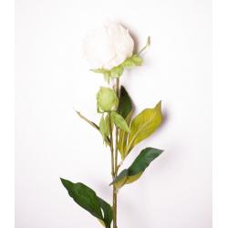 Pivoine Blanc H70 cm