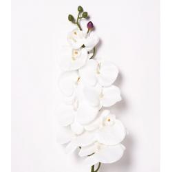 Orchidée Blanche 10 fleurs H105 cm