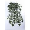Chûte de Lierre Anglais Vert H80 cm