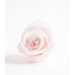 ROSA - Tête Rose Stabilisée D5-6cm RoseWood