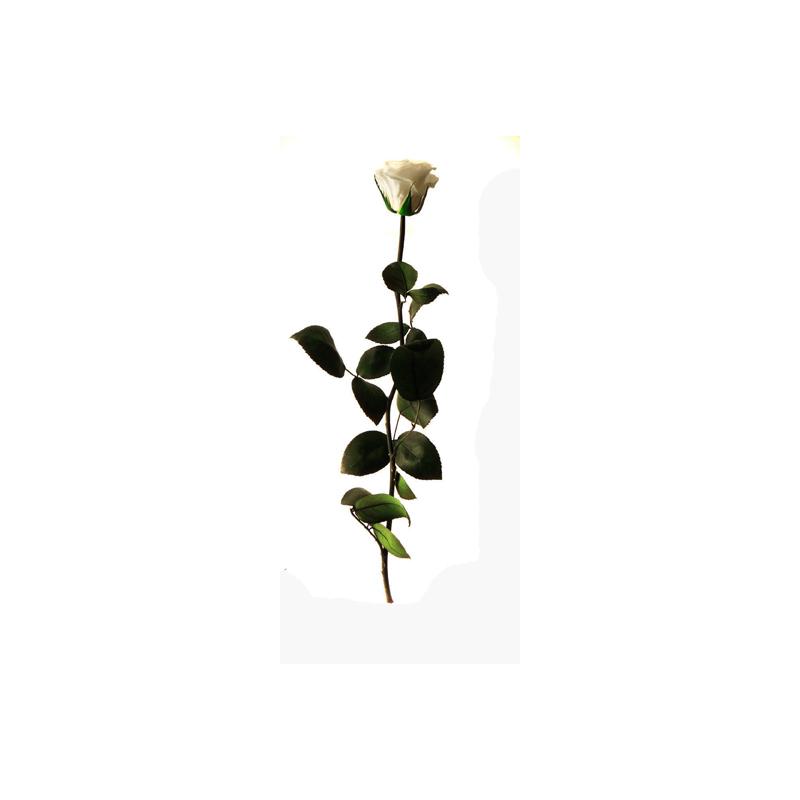 Rose Stabilisée sur tige Blanc