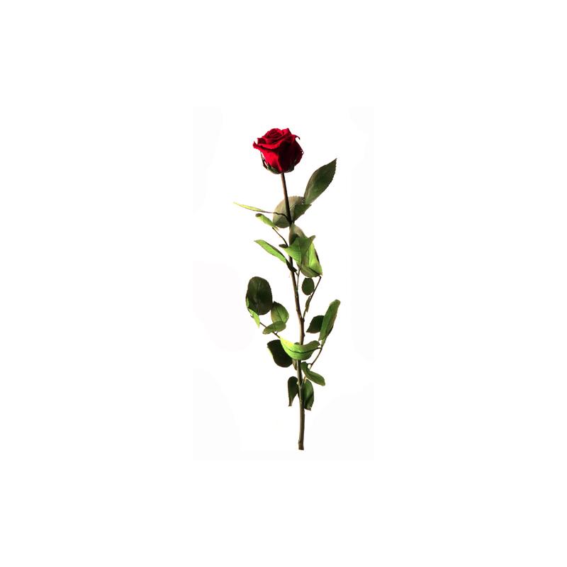 Rose Stabilisée sur tige Rouge