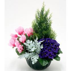 Vasque Sapin, cyclamen, violette, cinéraire H43 x D36 cm  par 2