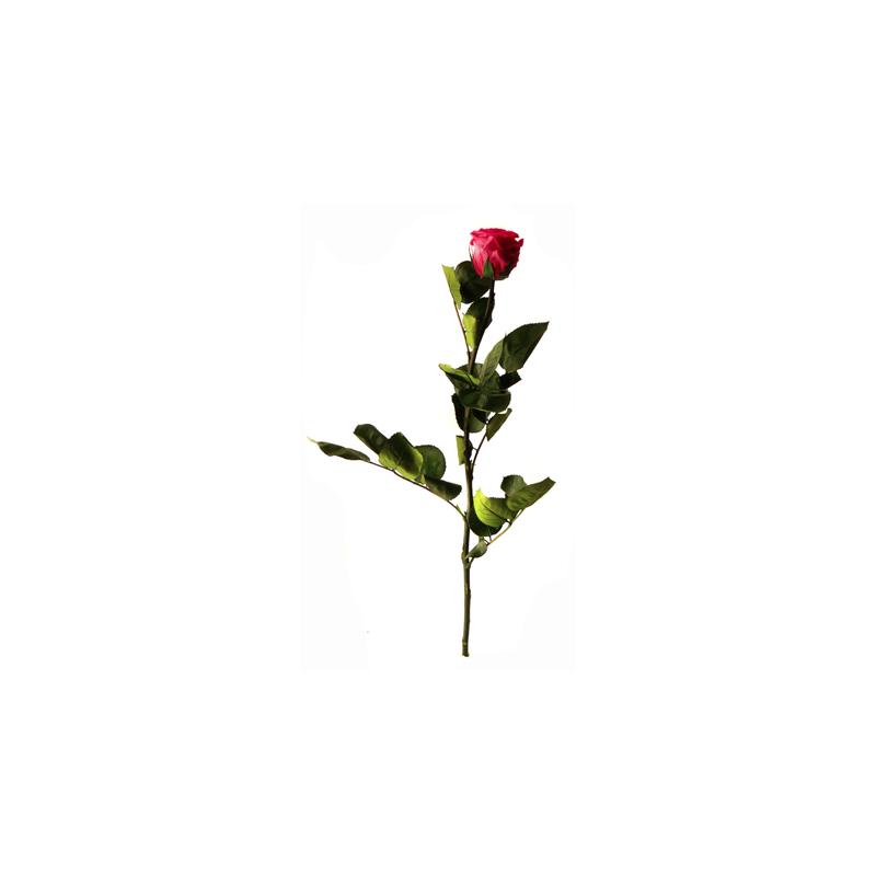 Rose Stabilisée sur tige Fuchsia