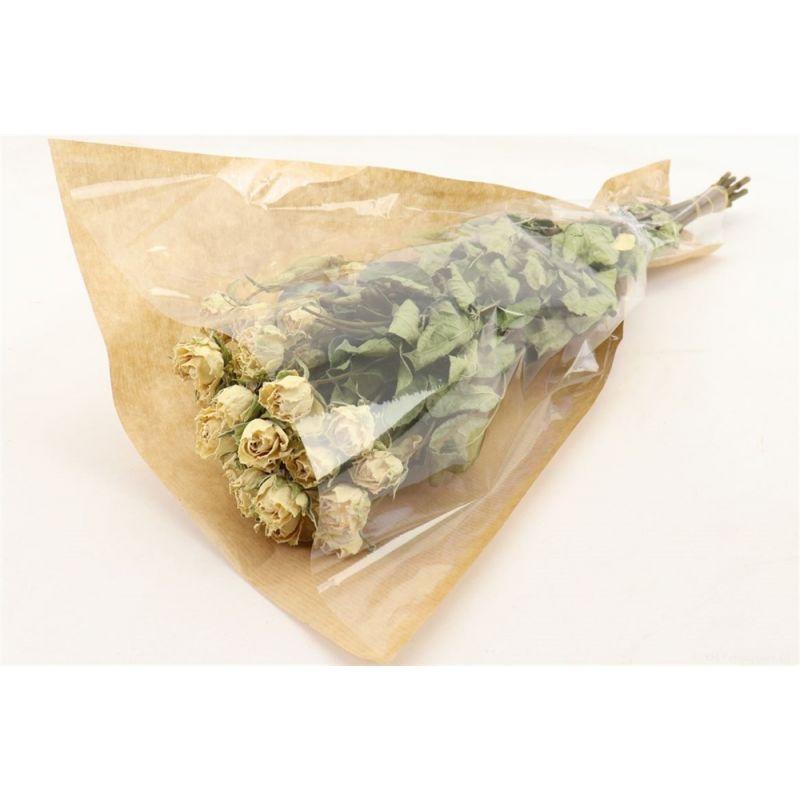 ROSA - Bouquet Rosa Dream par 10