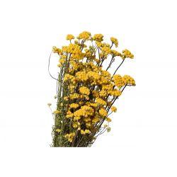 LONA - Bouquet Lona séché Jaune