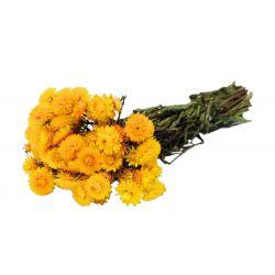 HELI - Bouquet Helichrysum séché Jaune