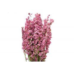 DELPH - Bouquet Delphinium séché Rose