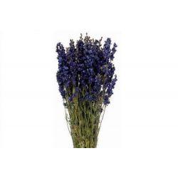 DELPH - Bouquet Delphinium séché Bleu