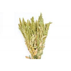 AMA - Bouquet Amaranthus séché Vert