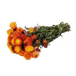 HELI - Bouquet Helichrysum séché Orange