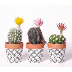 Cactus fleuris Assortis dans pot en céramique H16 à 19 cm par 4