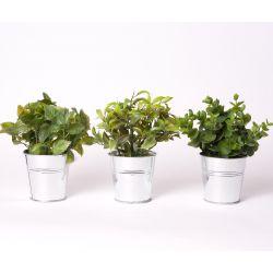 Plante 3 modèles assortis + Pot Zinc H16 à 17 cm