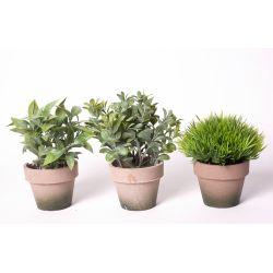 Plante 3 modèles assortis + Pot papier 12 à 16 cm