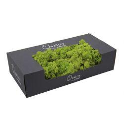 Mousse de Finlande Vert clair 500 gr