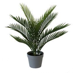 Plante Palmier 9 feuilles + Pot plastique H50 cm