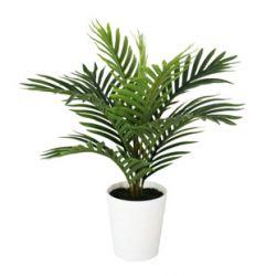 Plante Palmier 8 feuilles + Pot plastique H50 cm