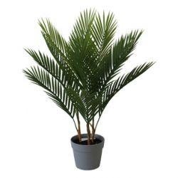 Plante Palmier 12 feuilles + Pot plastique H70 cm