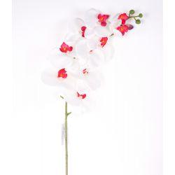 Fleur sur tige Orchidée 10 fleurs Crème / Fuchsia H105 cm