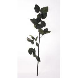 Tige de rose stabilisée pour rose stabilisée H50cm  par 5