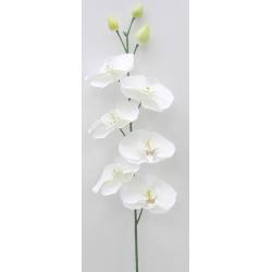 CETI - Orchidée 6 Fleurs...