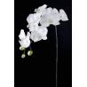 CETI - Orchidée 7 Fleurs H90 cm Crème/Lavande