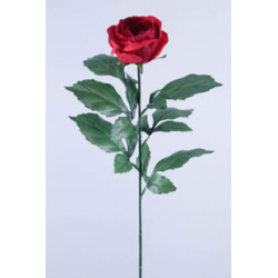 ROSA - Rose Ancienne 6...