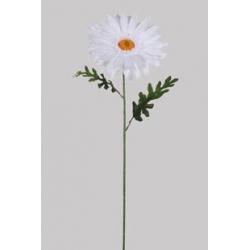 Marguerite D28 x H93 cm