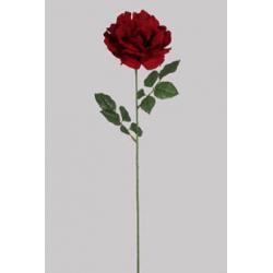 Bouton de Rose Rouge D22 x...