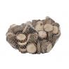 Sachet tranches de bois Naturel Chêne D2-5 cm par 500 gr