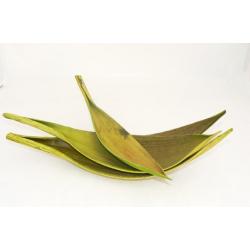 Coco Medium Vert par 10