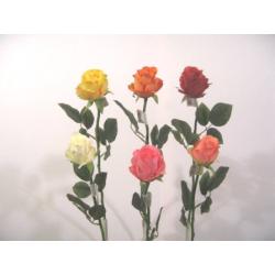 Rose Gros Bouton Rose/Vert