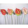 Anthurium h78 cm Rose/Vert