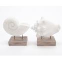 Coquillage Blanc support bois 15x7x16 cm