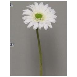 Gerbera Daisy Crème 48cm