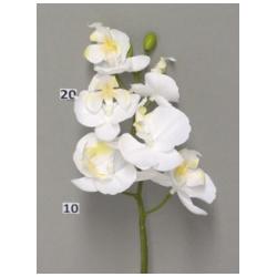 Mini Orchidée Blanc 33cm