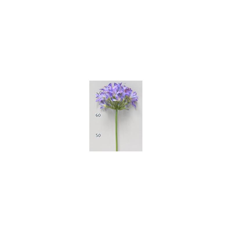 Agapanthe Bleue 80cm