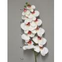Phalaenopsis Fuchsia/Crème 103cm