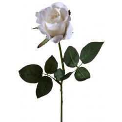 BLASY - Rose H68 cm Blanc