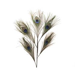 Branche de Plume de Paon 50x28 cm