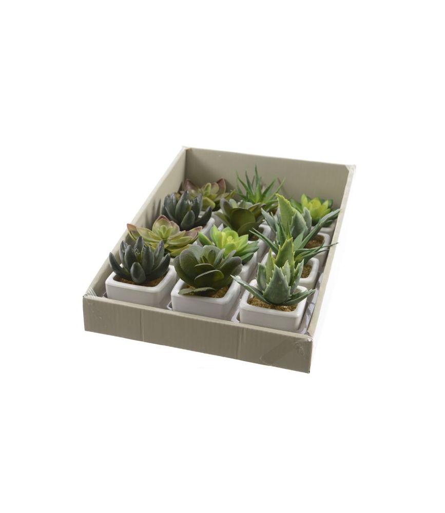 plante grasse artificielle dans pot 5x5x8 cm. Black Bedroom Furniture Sets. Home Design Ideas