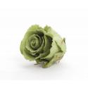 ROSA - Tête Rose Stabilisée d6.5cm Vert thé par 6