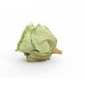 Tête de Rose Stabilisée d6 cm Vert Thé par 6